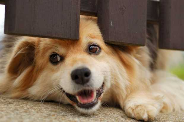 Best Type of Fencing for Pet Owners