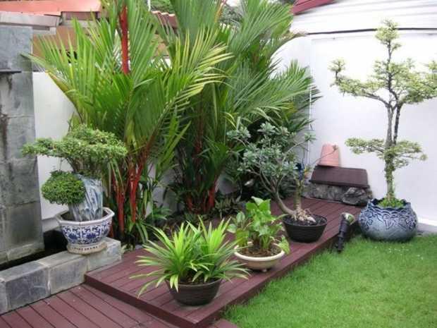 Exotic Outdoor Plants