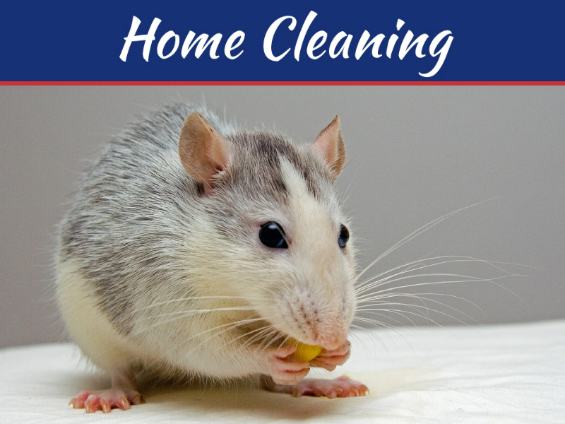How Mice And Other Rodents Can Devastate Your Property