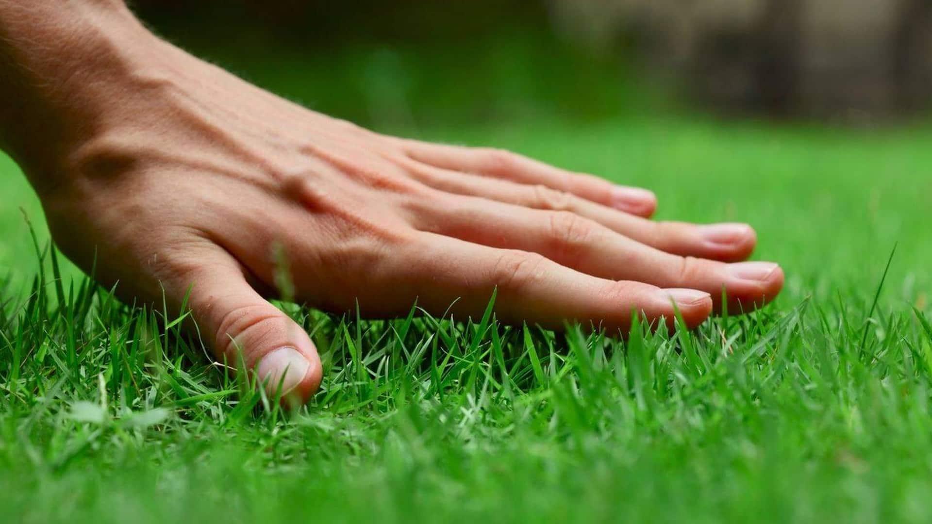 Fix Grass Bare Spots