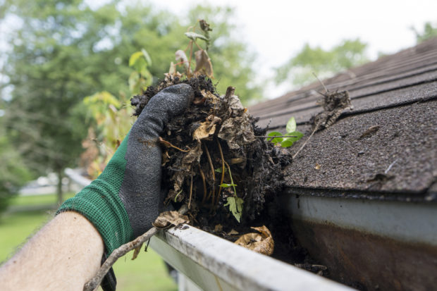 Cleaning Gutters During The Summer Time
