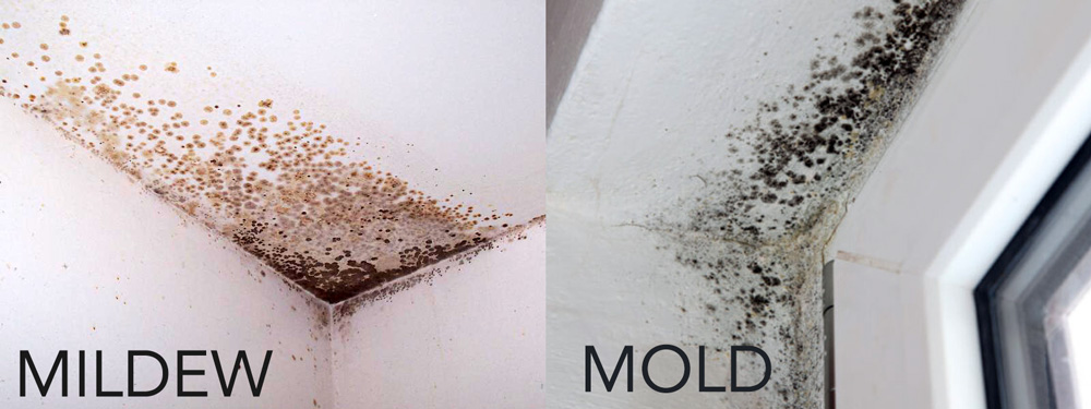 Mold or Mildew