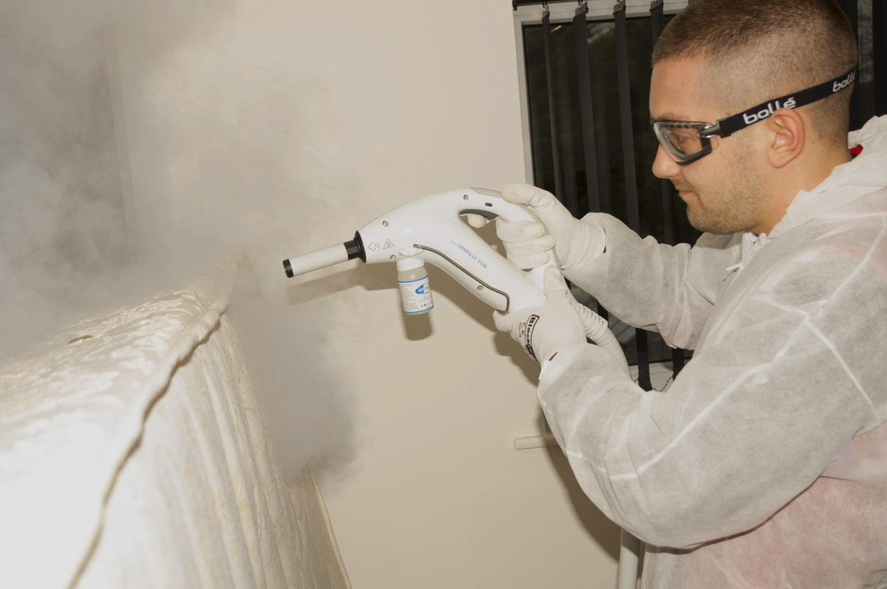 7 Tips To Control Bed Bugs My Decorative