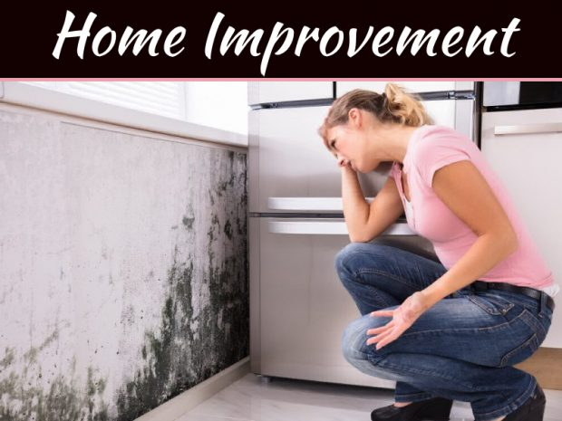 5 Things You Can To Do Solve Your Mold and Allergy Problems At Home