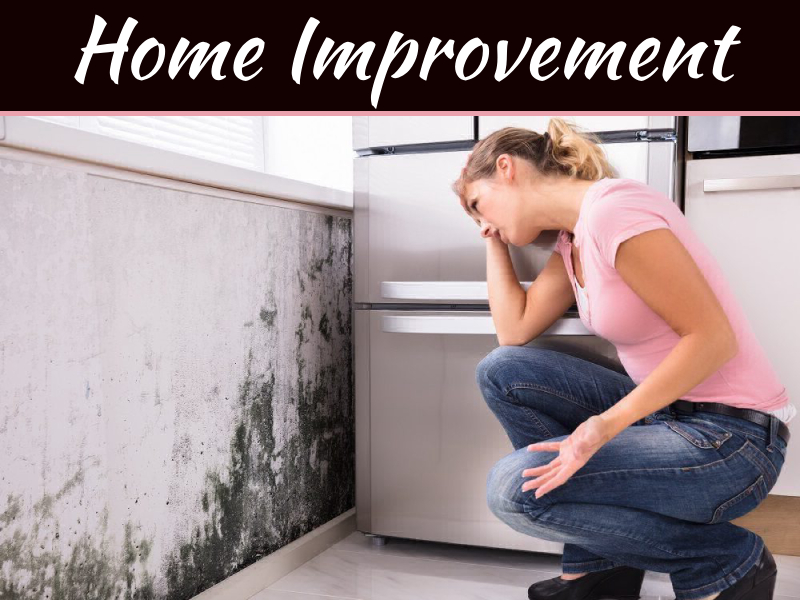 Top 5 Steps To Mold Removal
