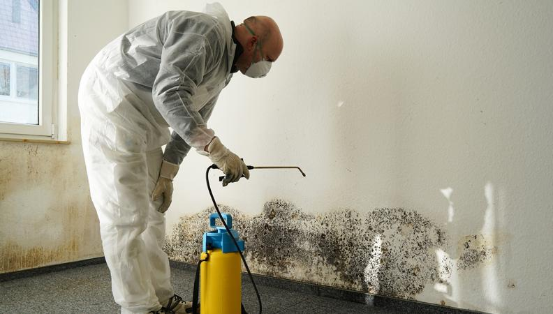 Professional Mold Removal