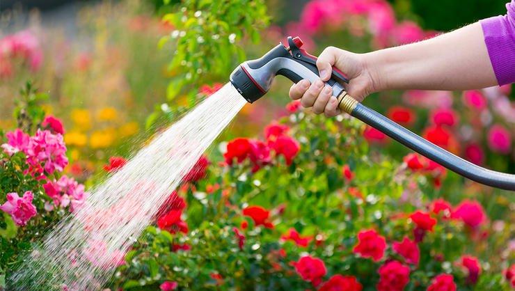 Watering Intervals for Indoor Garden