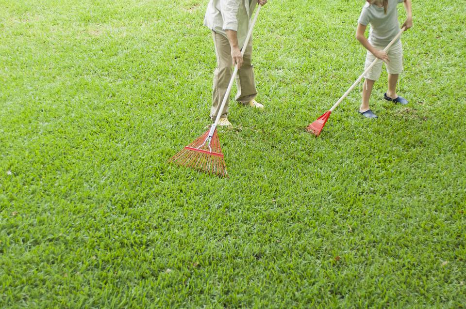 Leave Grass Clippings On The Lawn