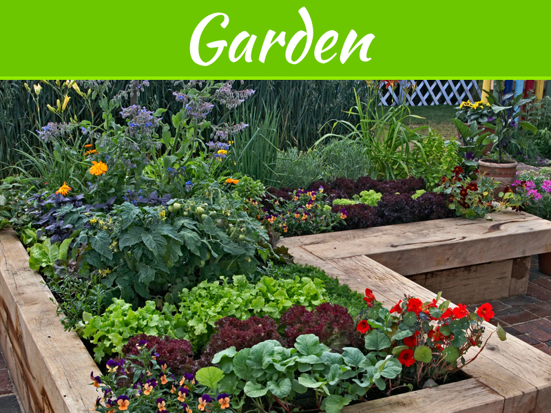 The Best Plants For Small Gardens