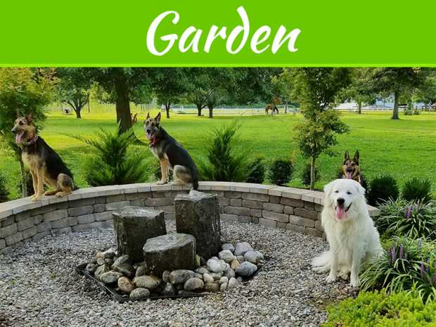 5 Tips For Keeping Pets Out Of The Garden
