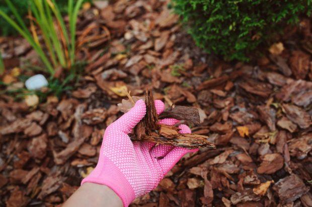 Chopped Leaves As Mulch