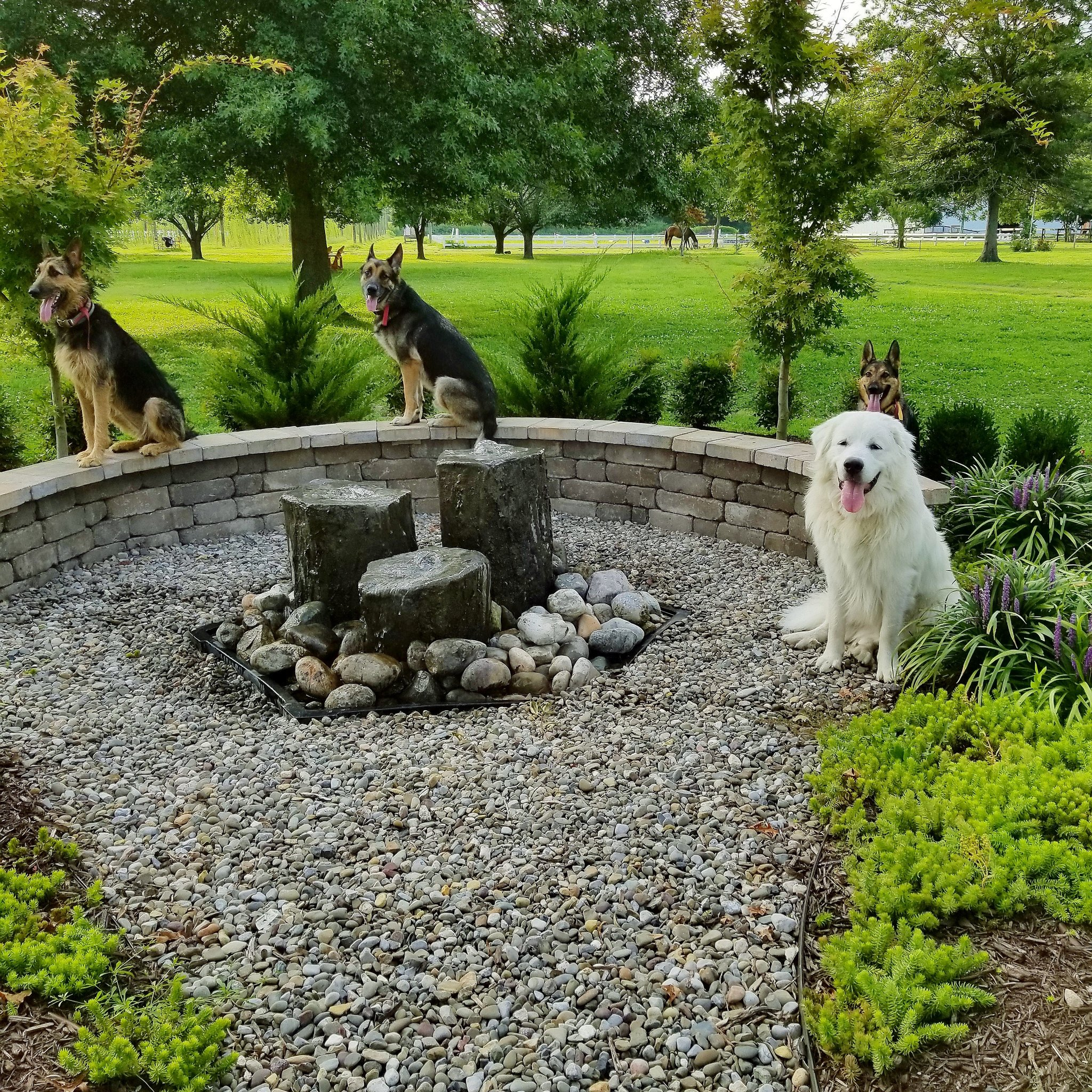 Create A Zone In Your Garden Or Yard Just For Your Pets