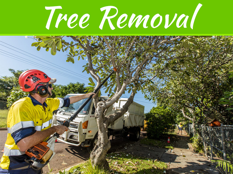 Tips For DIY Tree Removal With The Rights Tools And Knowledge