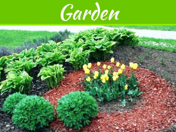 Top 8 Types Of Mulch Varieties For Garden