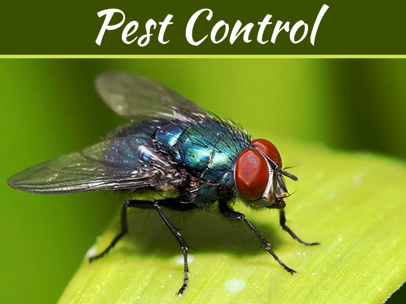 DIY Tips to Keep Pests Out