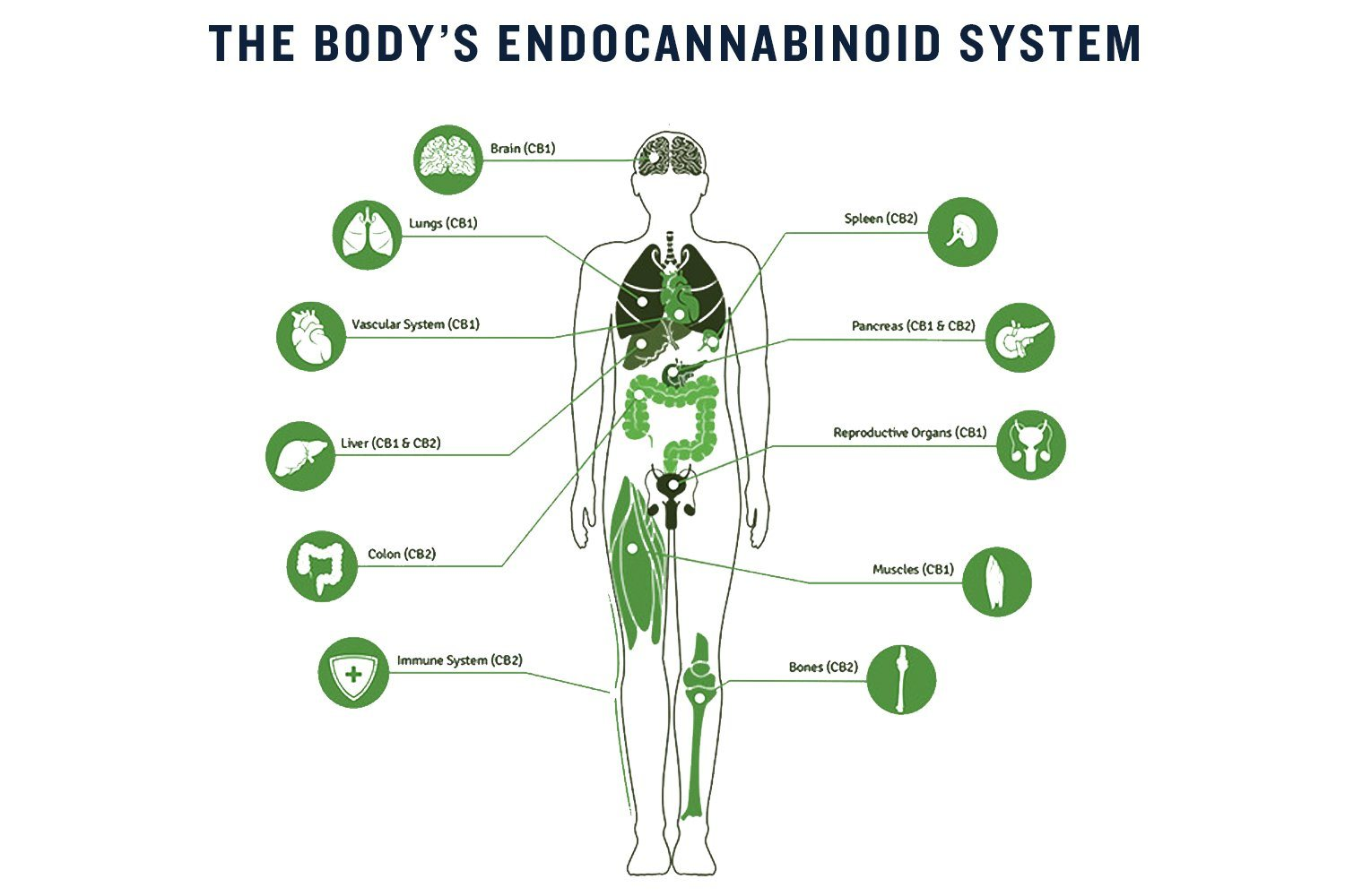 The Benefits of CBD Oil