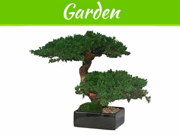 How To Take The Best Care Of Bonsai Trees