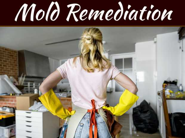When To Hire A Mold Remediation Company