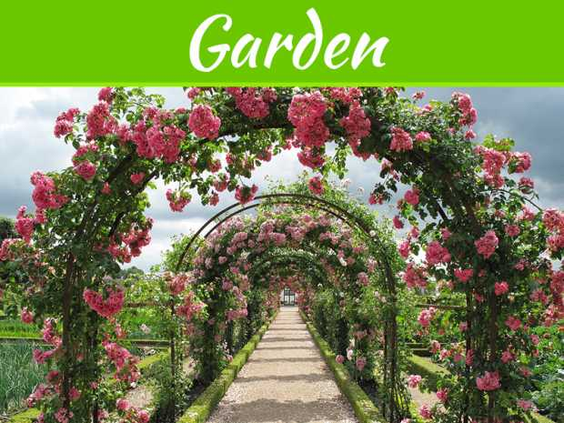 3 Benefits To Growing A Rose Garden