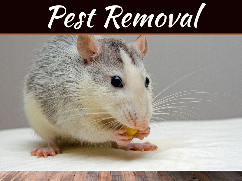 3 Common Pests Found in Home & Office