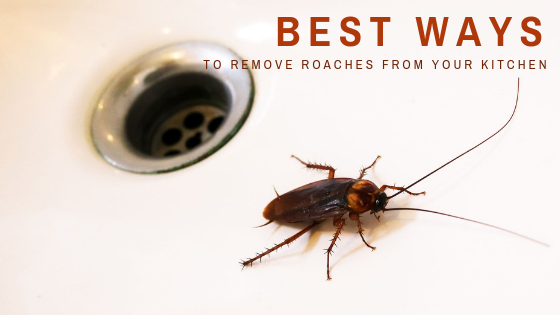 Best Ways To Remove Roaches From Your Kitchen