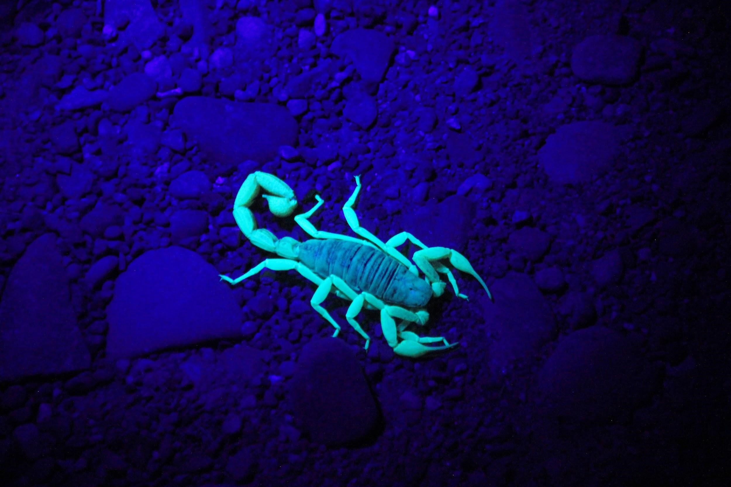 Scorpion Nesting Habits - Avoid Providing Shelters for