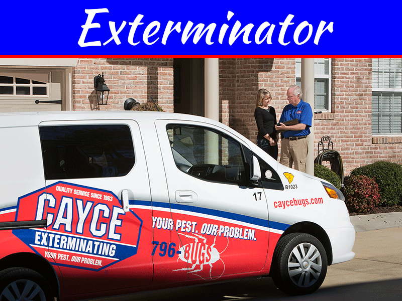 How To Hire An Exterminator