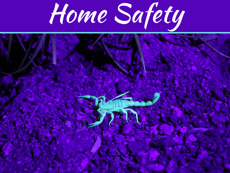 How To Keep Scorpions Out Of Your House - Keeping Your Home Safe