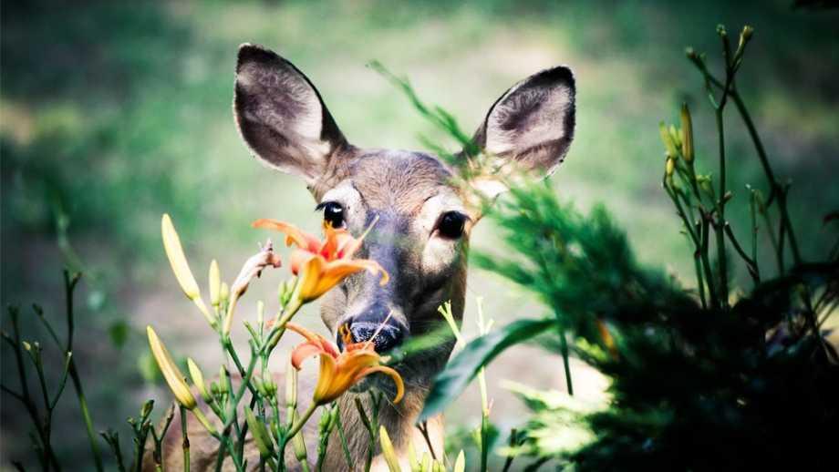 Got A Deer Problem