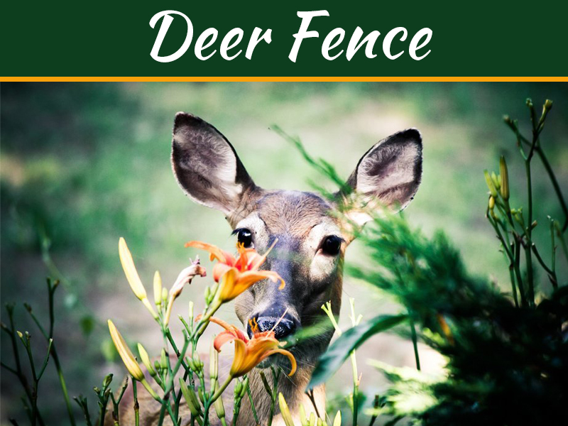 Got A Deer Problem? Get A Deer-Fence!