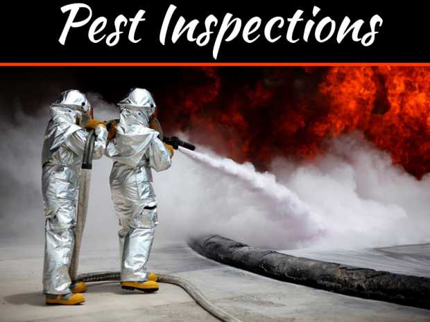 What Are The Potential Benefits Of Hiring Building And Pest Inspections Companies?