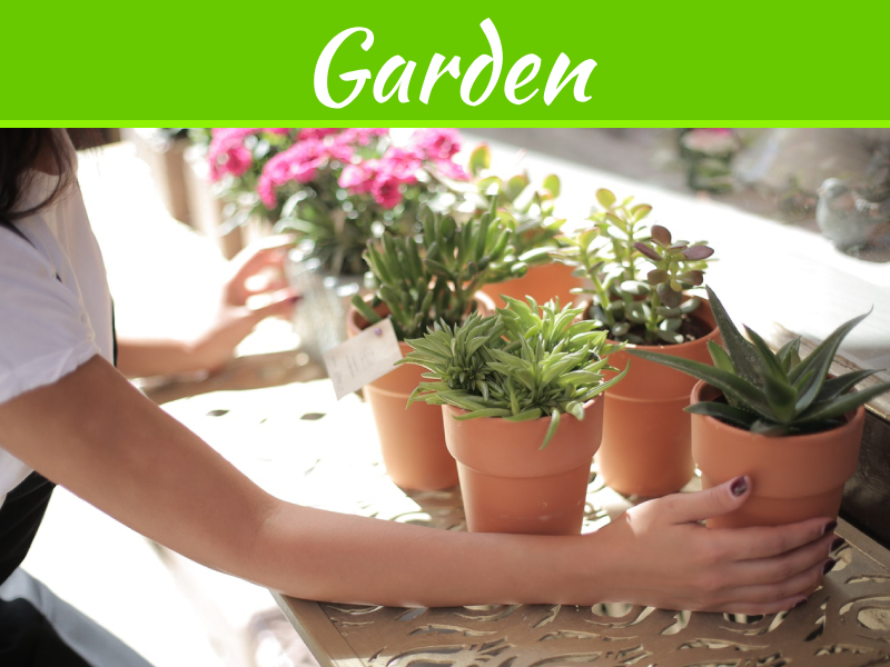 5 Low Maintenance Garden Ideas