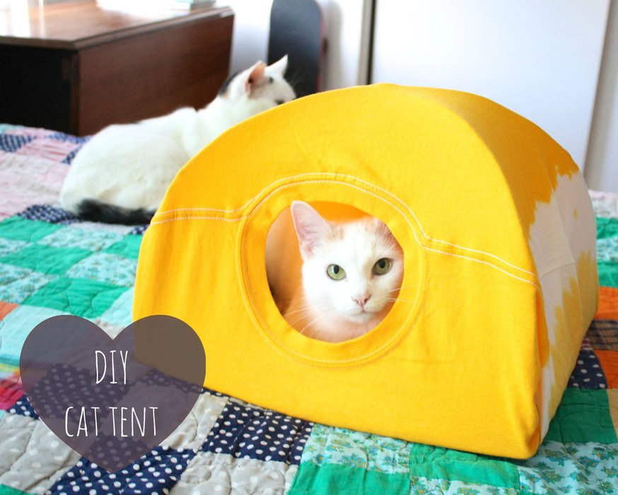 A Beautiful Cat Tent