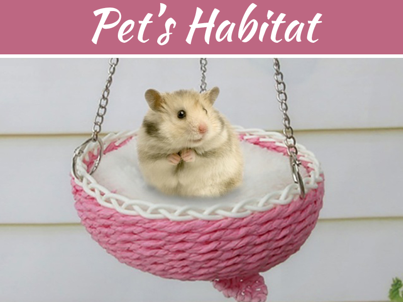 Epic Decoration And Design Ideas For Your Pet's Habitat