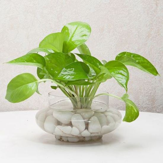 5 Indoor Plants To Bring Sheer Good Luck To The House | My