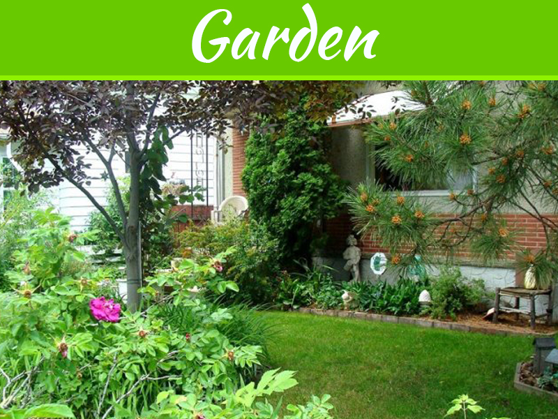 4 Ways To Create A Visually-Appealing And Functional Yard