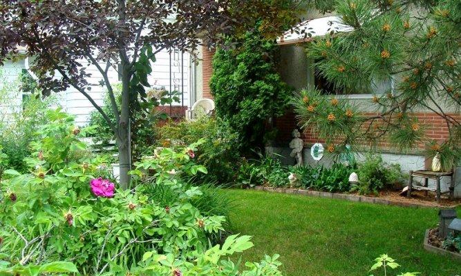 Plants In A Yard