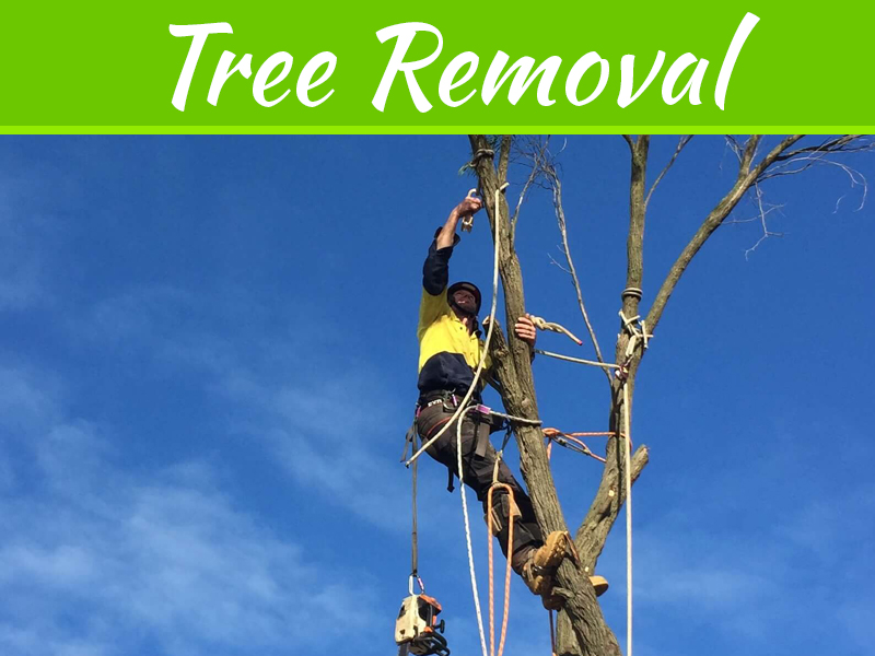 Get Professional Help For Tree Removal From The Home And Shoot Trimming