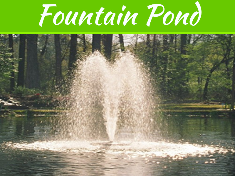 Learn How To Maintain Your Fountain Pond