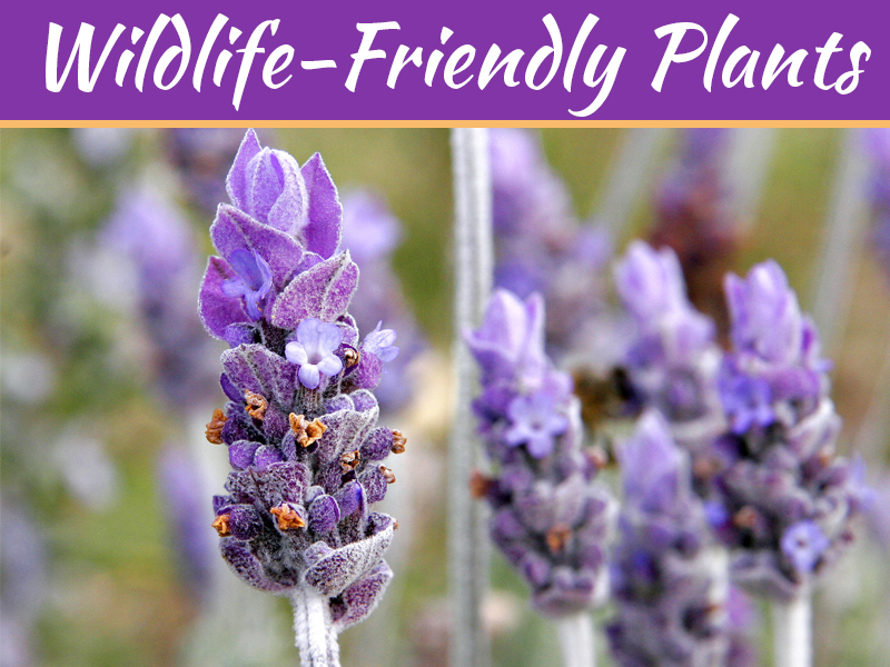 Top Wildlife-Friendly Plants For Summer 2019
