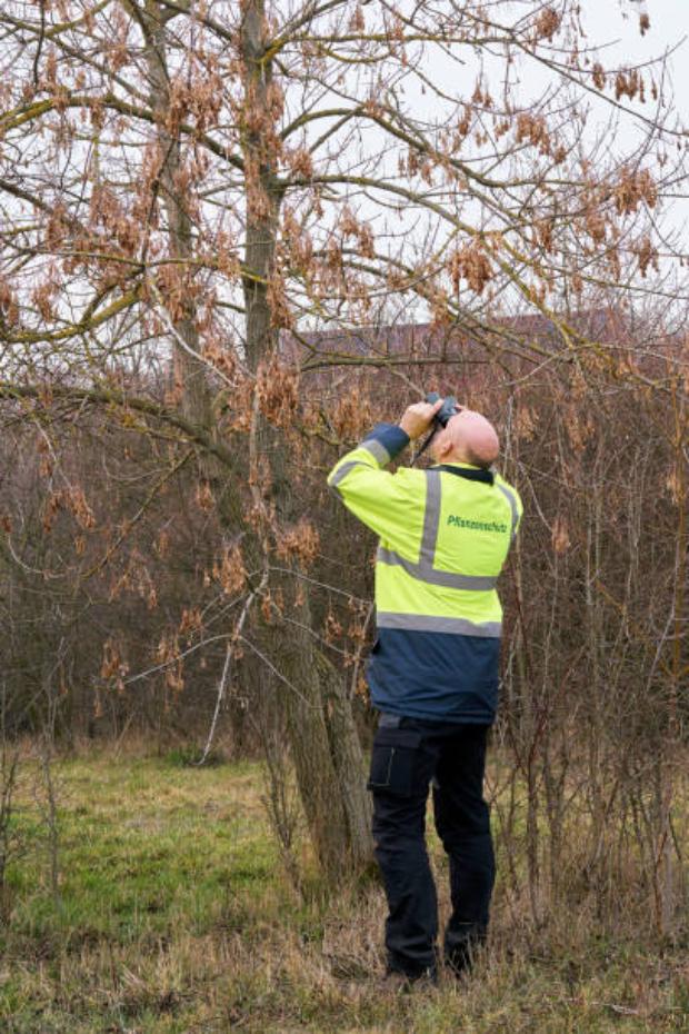 Tree Examination