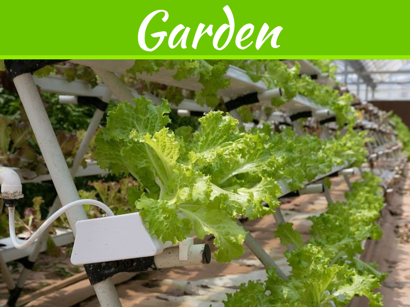 The Deal Between Gardening & An Online Canadian Hydroponics Store