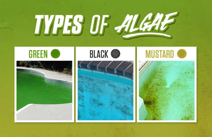 Types Of Algae in Pool