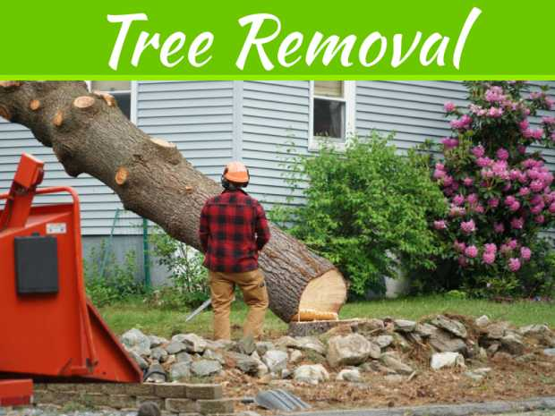 Common Reasons Why Trees Need Removal