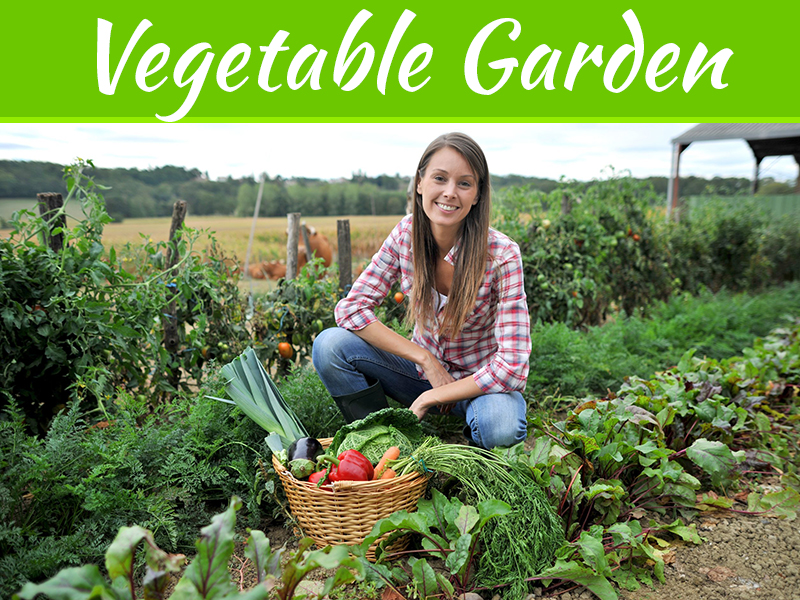 3 Tips To Grow Vegetables In A Small Garden