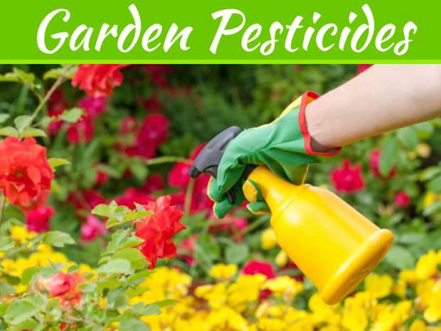 How To Naturally Get Rid Of Garden Pests