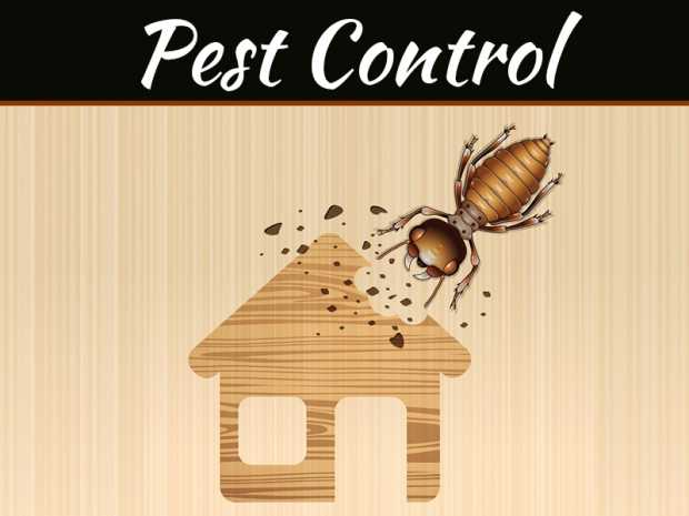 How To Prevent Pests In Any Area Of Your Home