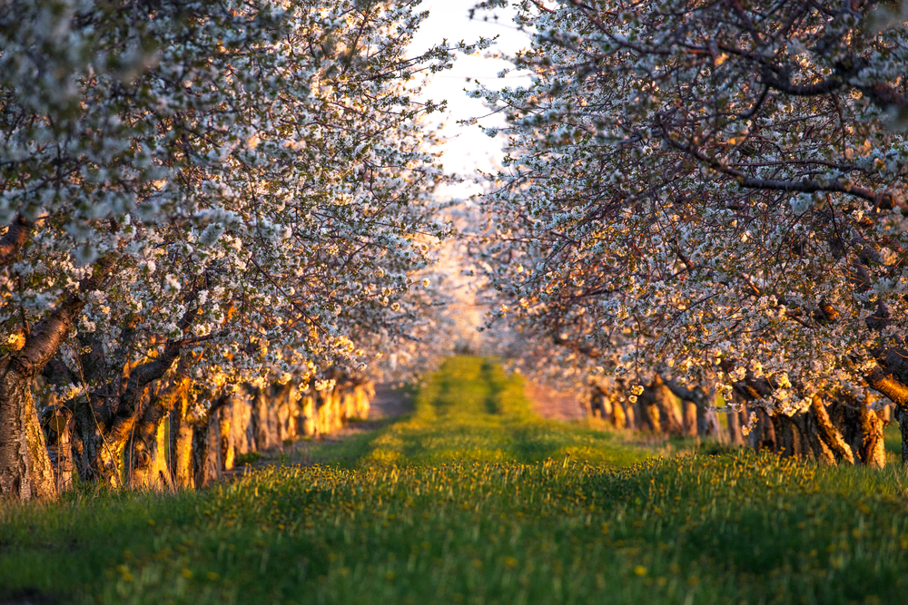 Planting Trees, Making Orchards
