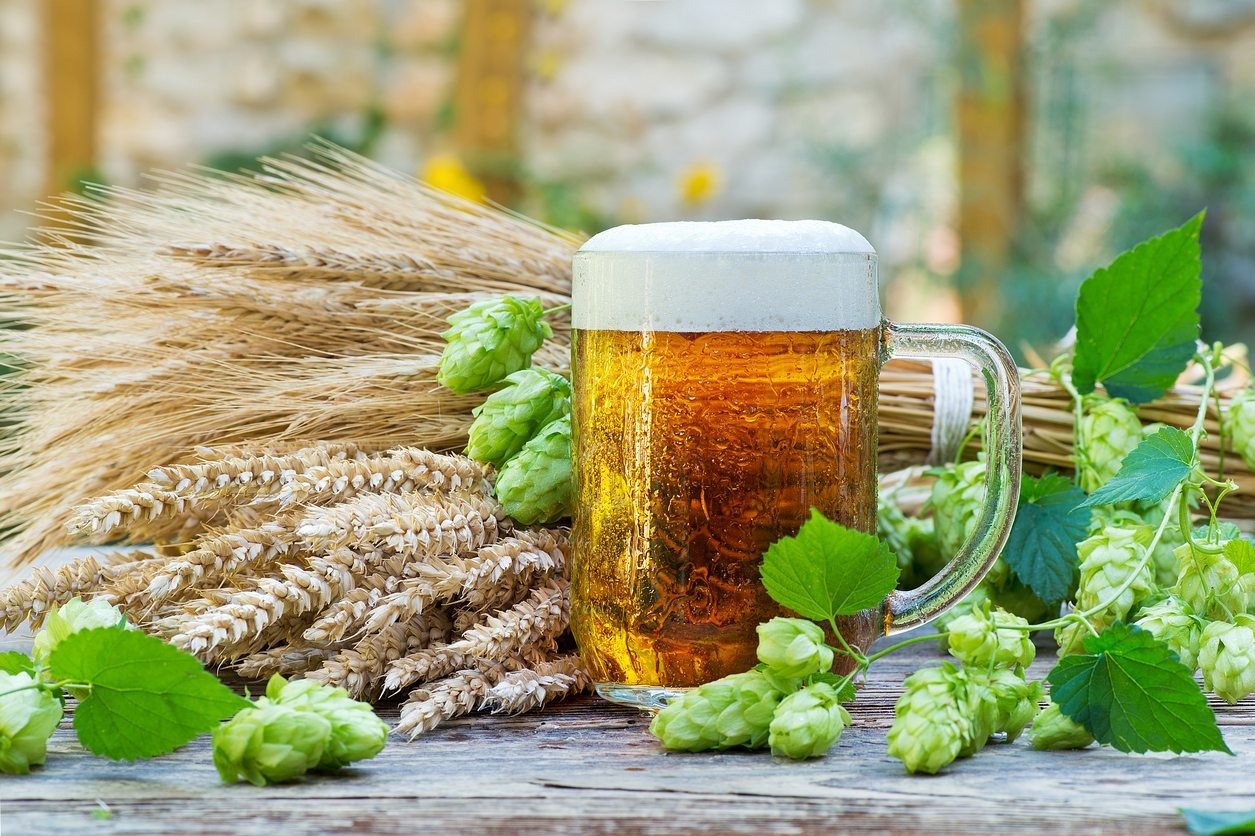 Use Beer In Garden As Natural Pesticides