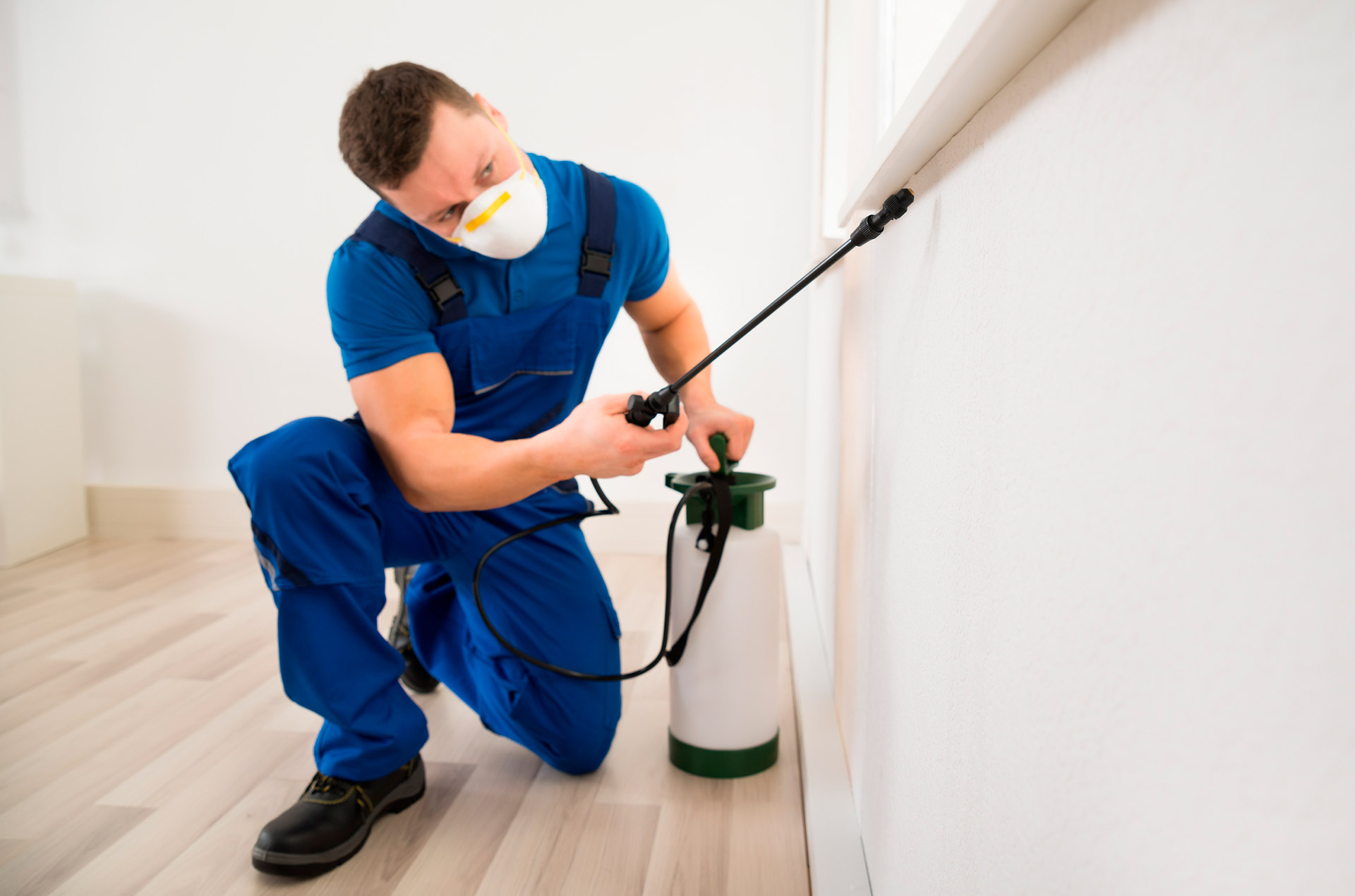 Bedbugs Removal